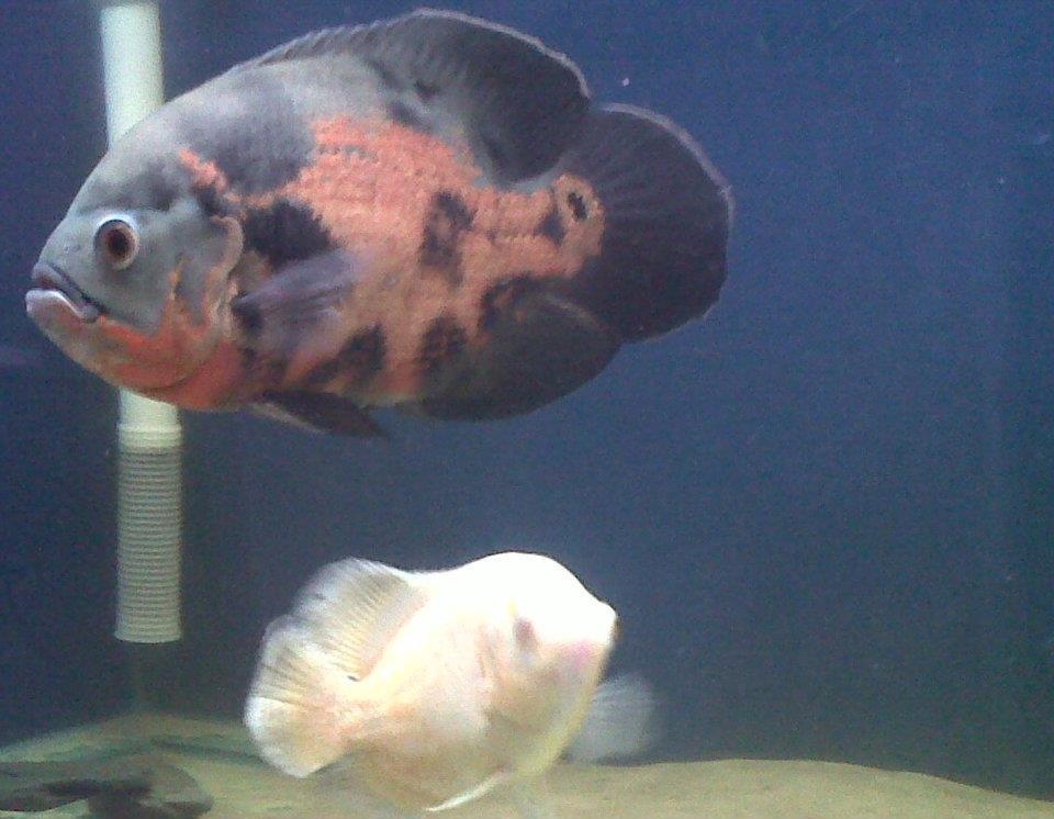 Merseyside Aquatic Warehouse - Tropical Fish
